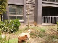 安粮城市广场电梯花园洋房一楼可规划院子毛坯四室南北通透